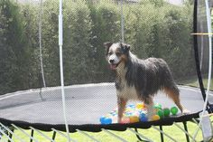 Where's the ball?!!?
