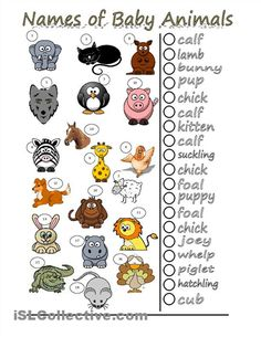 images of names of animal parents and their babies | ... of animals with the word for their young/babies. Key included