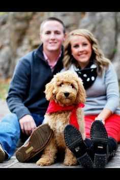 Miniature Goldendoodle!