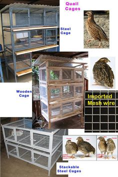 Quail Cages - Furniture Kenya | Kenya Furniture Manufacturer Dealer, Nairobi