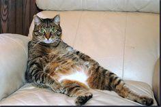 lounging like a OG cat