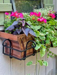 Window Box Plants, Window Box Flowers, Window Boxes, Flower Boxes, Diy Planter Box, Diy Planters, Starting A Garden, Garden Images, Garden Projects