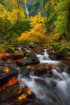 Fall colors along Starvation Creek in the Columbia River Gorge.