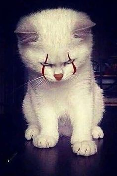 Any cats and kitten that are cute. See more ideas about Cute cats, Cute kittens Tags: Cute Little Animals, Cute Funny Animals, Cute Cats, Scary Animals, Funny Animal Memes, Cat Memes, Funny Cats, Funny Memes, Funny Videos