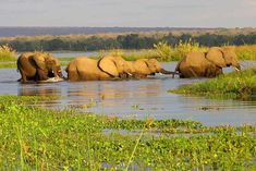Book your tickets online for Okavango Delta, Maun: See 560 reviews, articles, and 466 photos of Okavango Delta, ranked No.1 on TripAdvisor among 17 attractions in Maun.