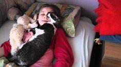 cornish rex cat - YouTube