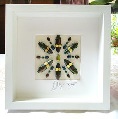 Artframe with real insects : Topquality by Alanscollectibles