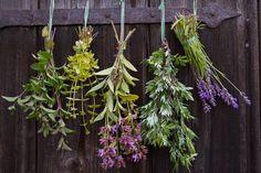 Frische Kräuter trocknen - Tipps & Tricks @ diybook.at Tricks, Flowers, Plants, Trust, Spirit, Fine Dining, Drying Herbs, Fried Cabbage Recipes, Medicinal Plants