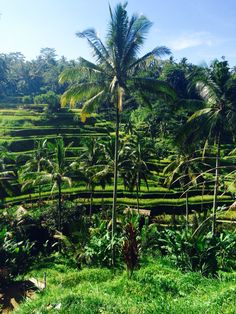 Tegallalang rice terraces, Ubud, Bali.