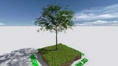 Продажа деревьев крупномеров по России