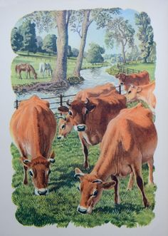 """Jersey Cows On Rich Pasture"" Charles Tunnicliffe - from the book 'Both Sides Of The Road: A Book About Farming' by Sidney Rogerson Jersey Cows, Edith Holden, Farm Kids, British Wildlife, Classic Paintings, Illustration Art, Book Illustrations, Typography Prints, Natural History"