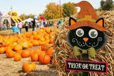 Don't Miss These 10 Great Pumpkin Patches In Colorado This Fall