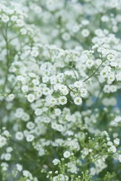 The perennials top 10 of picking flowers - GroenVandaag