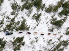 The Iditarod Trail Sled Dog Race covers around 1,000 miles of Alaskan terrain.