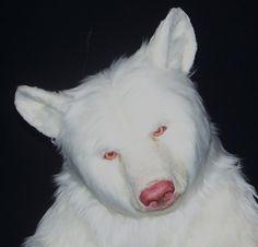 Albino black bear. This doesn't even make sense!!!!!! But it's sooo cool!