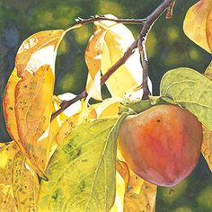 Life in Full Color - Watercolors by Cara Brown - Persimmon Sun