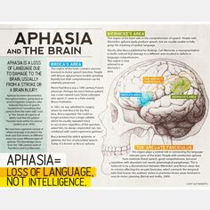 Handout for patients and their families that describes Broca's area, Wernicke's area, and the arcuate fasciculus as they relate to language function and aphasia. Speech Language Therapy, Speech Language Pathology, Speech And Language, Wernicke's Area, Aphasia Therapy, Occupational Therapy, Speech And Hearing, Brain Anatomy, Berlin