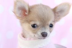 puppies free pictures