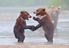 bear-cubs-photography-parenting-15