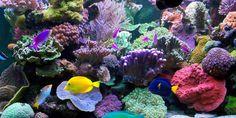 Gorgeous reef aquarium.