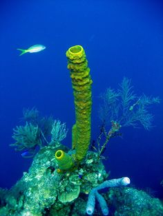 Underwater view, Lighthouse Reef, Belize Copyright: Sylwia Bonee