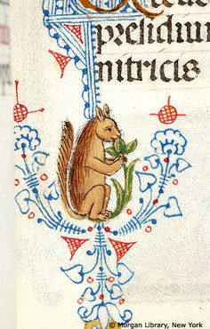 Book of Hours, MS M.80 fol. 50r - Pen flourished initial C with foliate extenders inhabited by squirrel holding green branch to mouth with front feet.