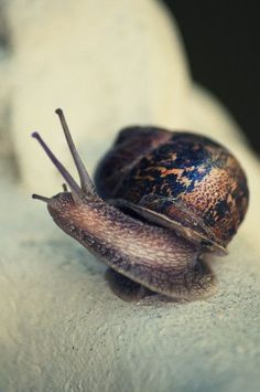 Tilt Shift Photos, Snail Art, Snails In Garden, Snail Shell, Bugs And Insects, Weird Creatures, Reptiles And Amphibians, Woodland Creatures, Macro Photography
