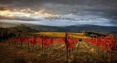 Сокровища Тосканы #тоскана #пейзаж #виноградник Автор: Centurion