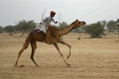 She-camel race, Camel Fair, Bikaner