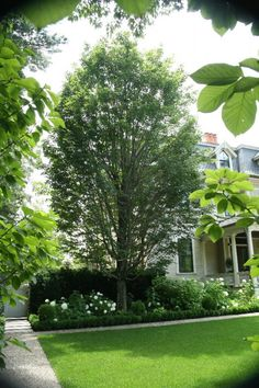 Tree and Plantings