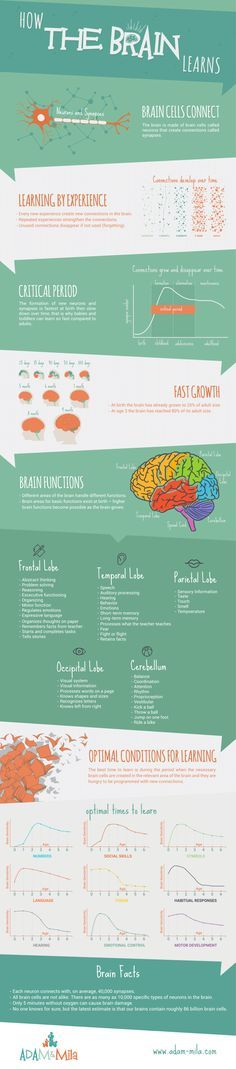 Brain Development of Children from 0 to 6 years - How the Brain Learns