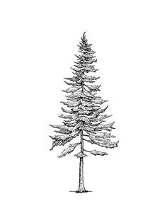 Black and White Print – Wall Art – Drawing – Illustration – Print – Design – Pen and Ink – Nature Print – Tree Drawing – Pine Tree Pine Tree ********** Trees are. Pine Tattoo, Tattoo Sketch Art, Tattoo Art, Tree Tattoo Back, Tree Tattoos, Tree Drawing Simple, Tree Tattoo Designs, Tattoo Ideas, Tree Sketches
