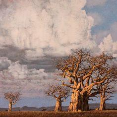 plains grove John Meyer, Nelson Mandela, Landscape Art, Google Images, Clouds, Portrait, Gallery, Outdoor, Landscapes