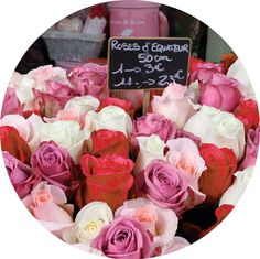If my rented Paris apartment had been bigger than a postage stamp I might have indulged in a bouquet or two of beautiful roses. Instead I contented myself by soaking in the sights and the smells of Ile de la Cité's Marché aux Fleurs.  #paris #parisian #parisjetaime #parismonamour #flowerslovers #flower #flowerstagram #flowershop #flowerporn #red #white #pink #france #french #rose #roses #travel #travelph #instagram #instaart #traveller #travels #travelling #travelgram #igers #igersoftheday…
