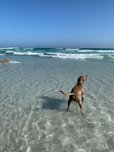 Winter – Beach – Fun During winter is playing on the beach the most amazing fun. Beach Fun, Ocean Beach, Winter Beach, Weimaraner, Pretty Girls, Elsa, Backyard, Puppies, World