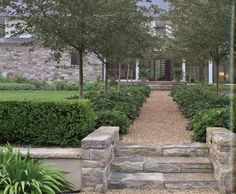 hawthorn allee with hellebors Pea Gravel, Modern Landscaping, Stepping Stones, Sidewalk, Outdoor Decor, Plants, Landscapes, Gardens, Home Decor