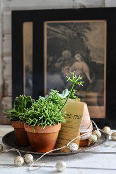 FLOWERS by titti & ingrid.
