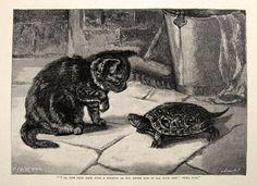 1891 Cat & Turtle Antique Print Engraving, Animals ~ Antique Prints