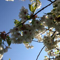 Nydelig hvite blomster