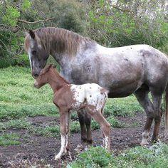 Horses are wonderful!