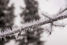 Frozen fog crystals.