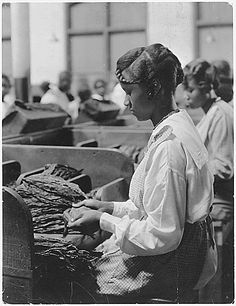 Tobacco plant. Picture of [African-American] woman before work tables covered with tobacco., 01/19/1922. From the General Photographic File of the Women's Bureau