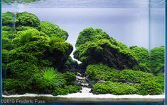 2015 AGA Aquascaping Contest - Entry #550