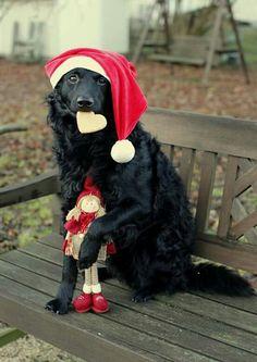 Christmas mudi