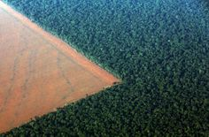 The Amazon rain forest, bordered by deforested land prepared for the planting of soybeans, is pictured in this aerial photo taken over Mato Grosso state in western Brazil, October 4, 2015. REUTERS/Paulo Whitaker