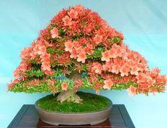 Via Bonsai & Suiseki Magazine Flowering Bonsai Tree, Bonsai Plants, Bonsai Garden, Bonsai Trees, Bonsai Flowers, Indoor Bonsai, Miniature Trees, Small Trees, Ikebana