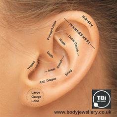 Ear Piercings Piercings And Types Of Ear Piercings On Pinterest