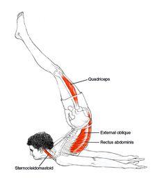 Viparita Shalabhasana - Leslie Kaminoff Yoga Anatomy Illustrated by Sharon Ellis