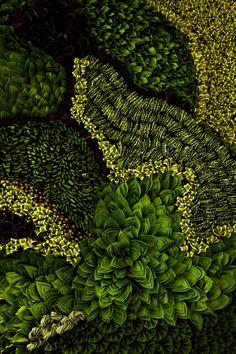 Green Walls and Living Sculpture Blend Art and Fas - Jardin Vertical Fachada Living Green Wall, Green Wall Art, Green Walls, Indoor Garden, Garden Art, Image Doc, Flower Artists, Flowering Trees, Go Green