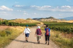 a group of pilgrims walking the camino de santiago vinyards in la rioja region, spain
